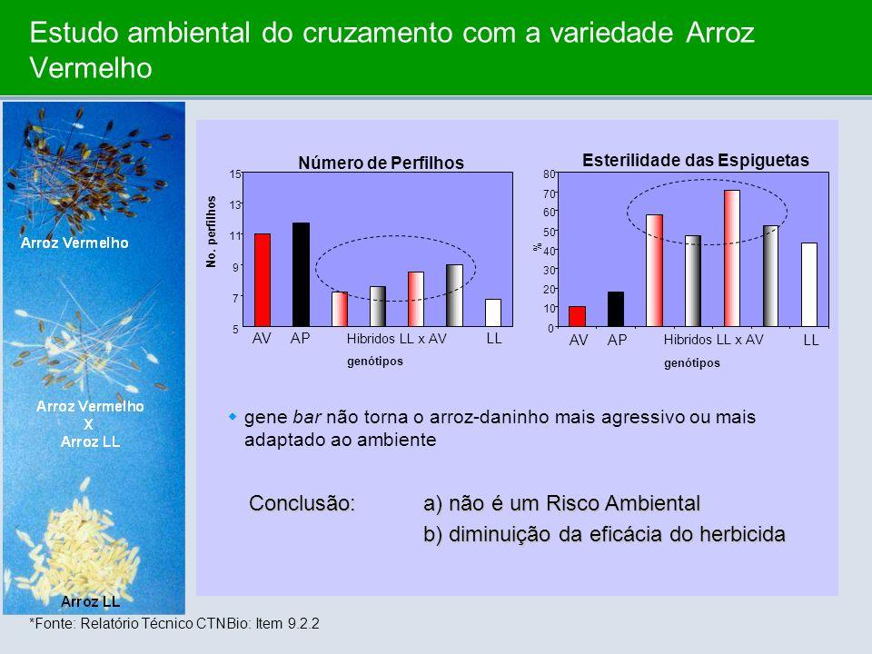 Estudo ambiental do cruzamento com a variedade Arroz Vermelho