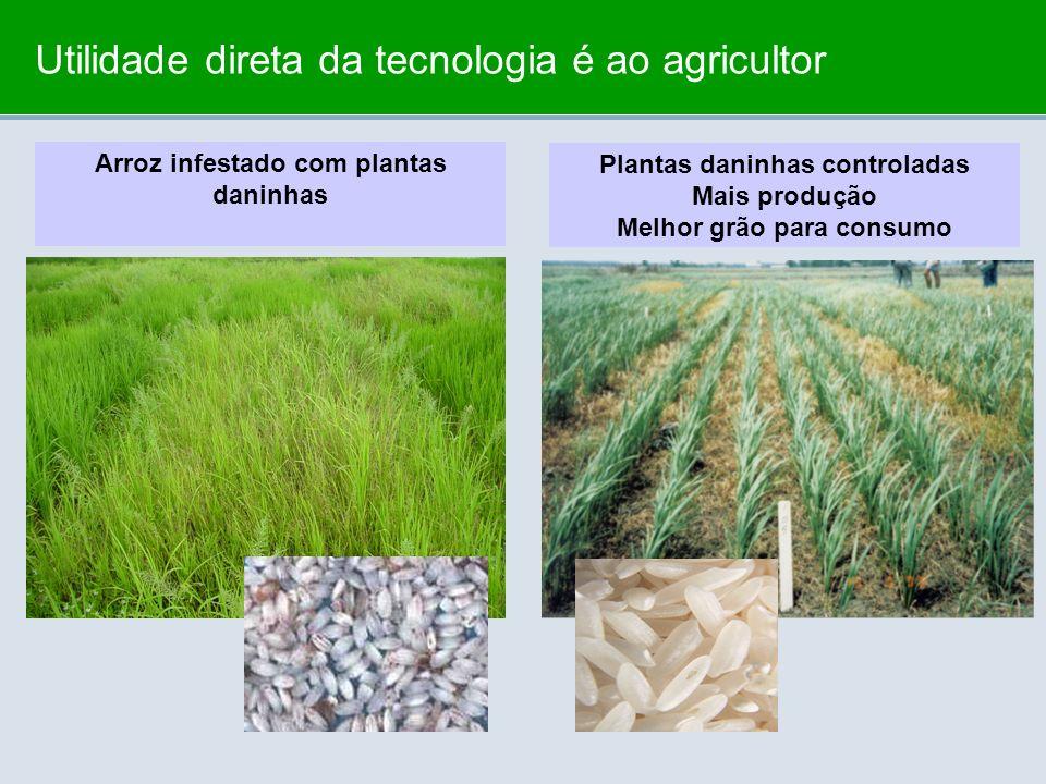 Utilidade direta da tecnologia é ao agricultor