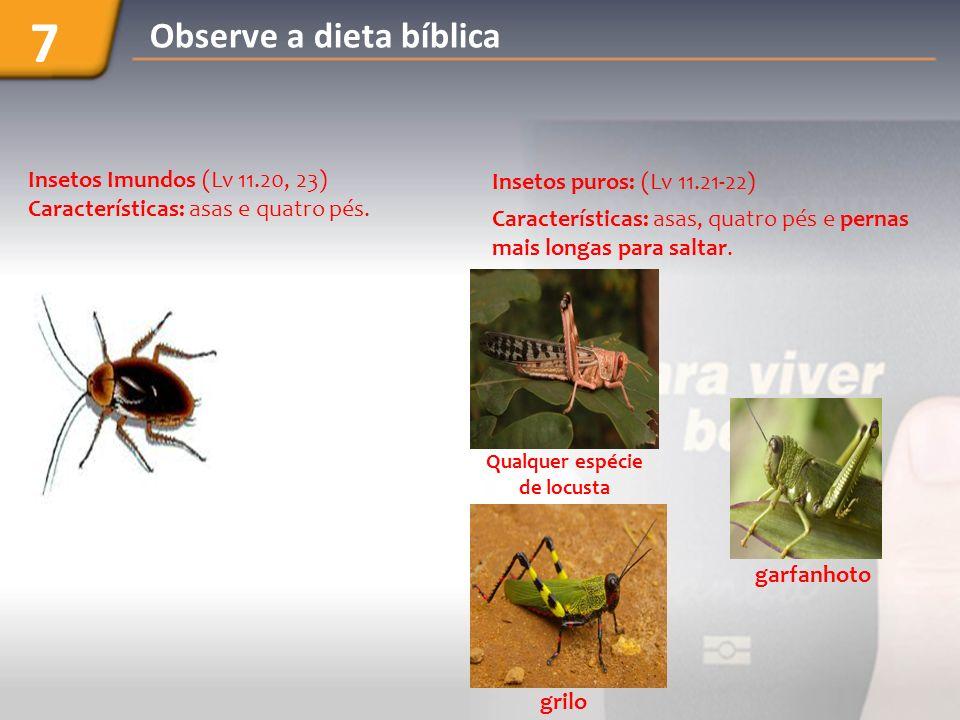 Insetos Imundos (Lv 11.20, 23) Características: asas e quatro pés.