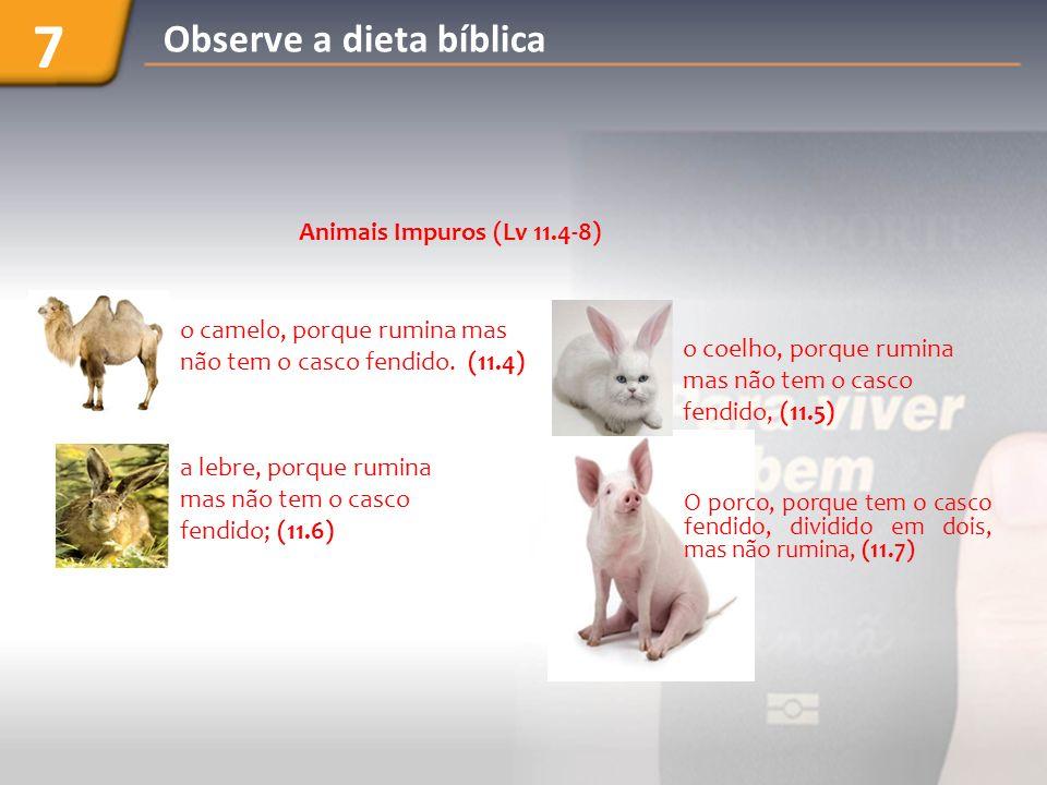 7 Observe a dieta bíblica Animais Impuros (Lv 11.4-8)