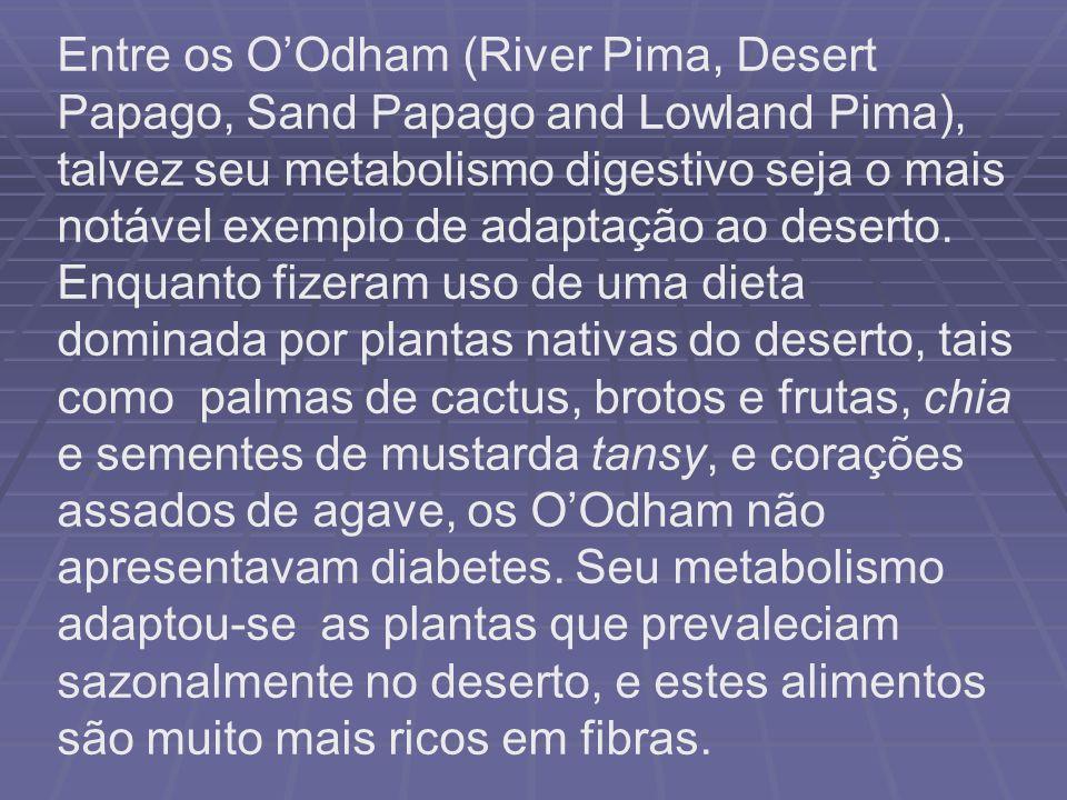 Entre os O'Odham (River Pima, Desert Papago, Sand Papago and Lowland Pima), talvez seu metabolismo digestivo seja o mais notável exemplo de adaptação ao deserto.