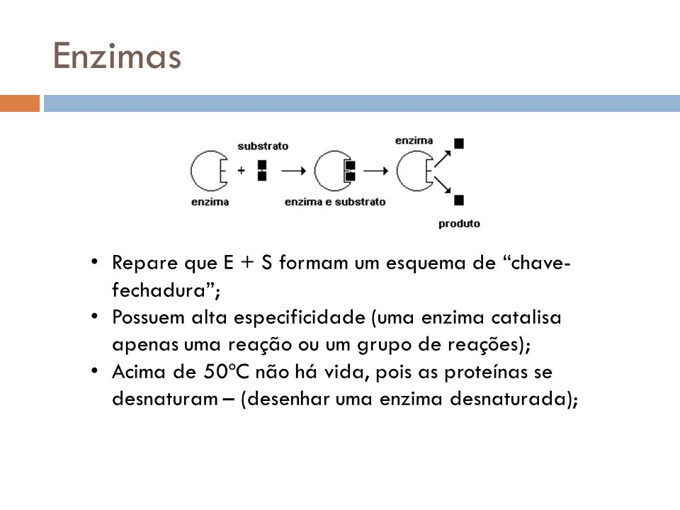 Enzimas Repare que E + S formam um esquema de chave-fechadura ;