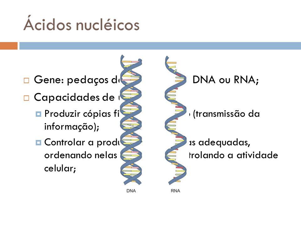 Ácidos nucléicos Gene: pedaços de moléculas de DNA ou RNA;