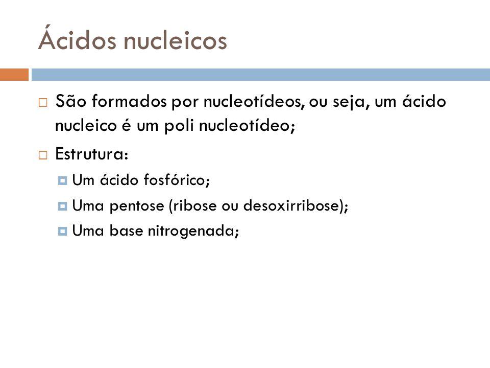 Ácidos nucleicos São formados por nucleotídeos, ou seja, um ácido nucleico é um poli nucleotídeo; Estrutura: