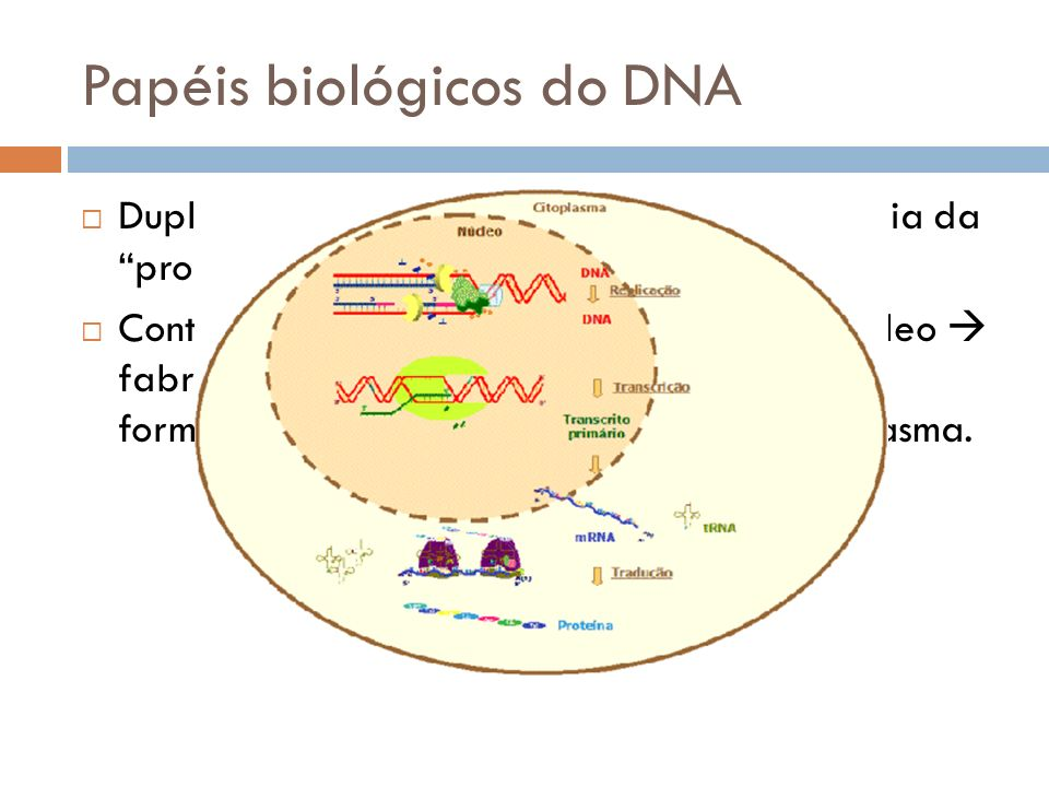 Papéis biológicos do DNA
