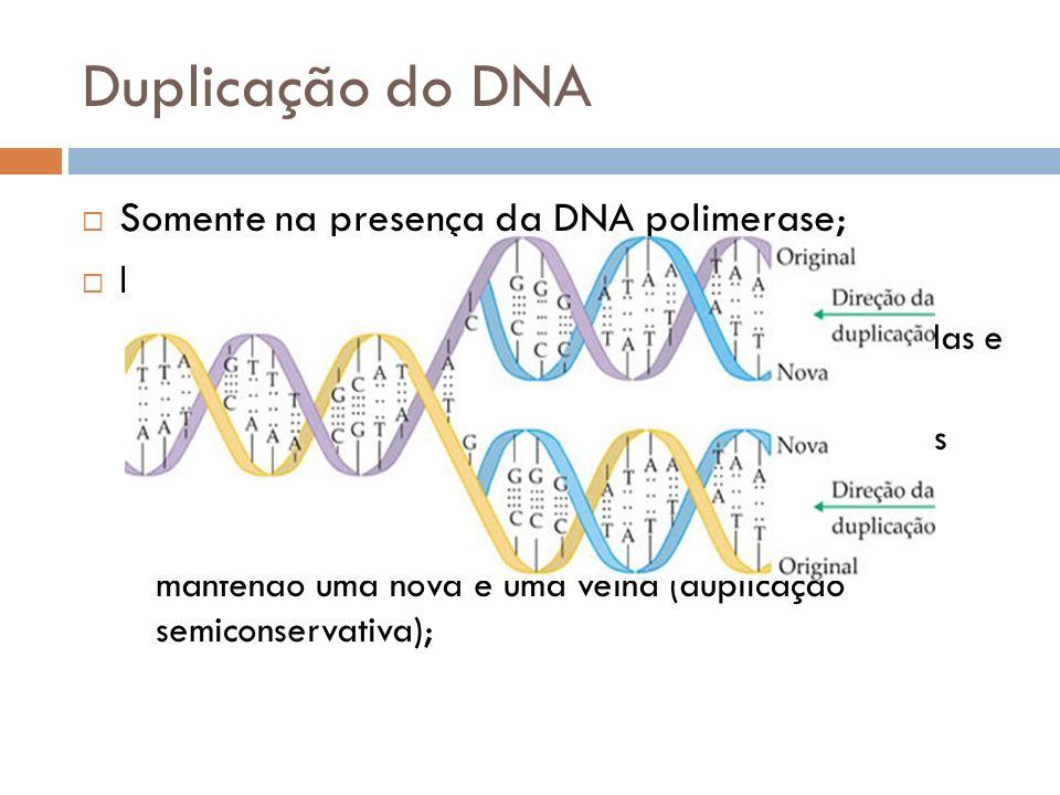 Duplicação do DNA Somente na presença da DNA polimerase; Etapas: