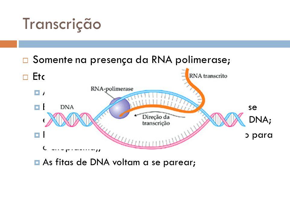 Transcrição Somente na presença da RNA polimerase; Etapas: