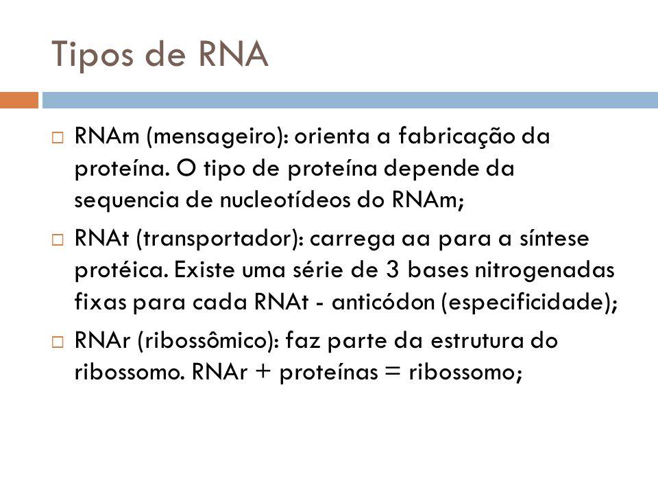 Tipos de RNA RNAm (mensageiro): orienta a fabricação da proteína. O tipo de proteína depende da sequencia de nucleotídeos do RNAm;