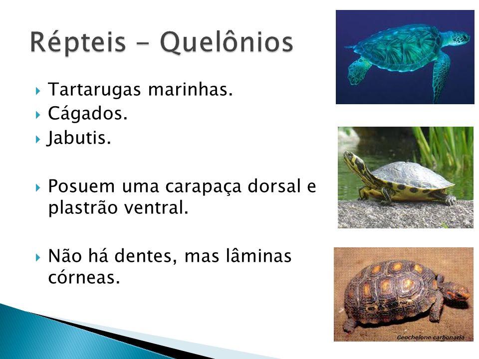 Répteis - Quelônios Tartarugas marinhas. Cágados. Jabutis.