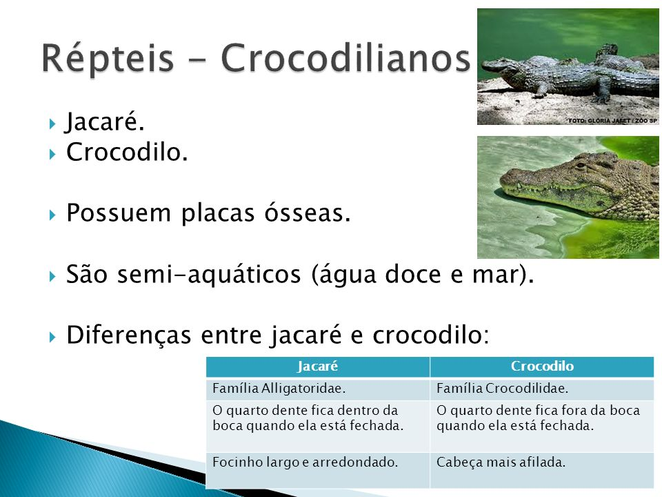 Répteis - Crocodilianos