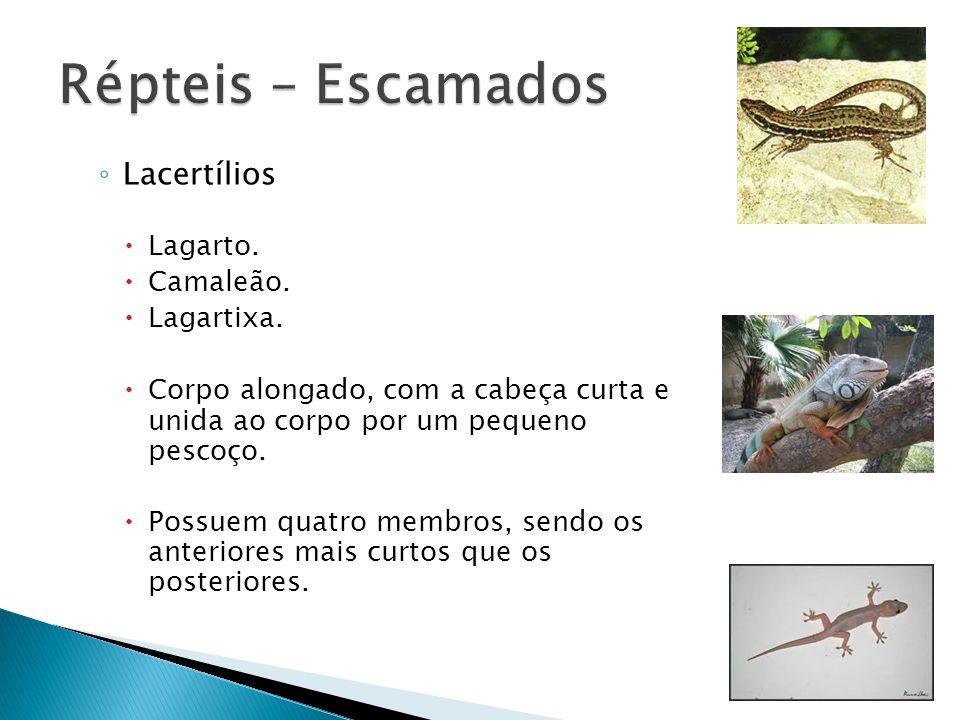 Répteis – Escamados Lacertílios Lagarto. Camaleão. Lagartixa.
