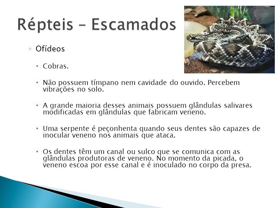 Répteis – Escamados Ofídeos Cobras.