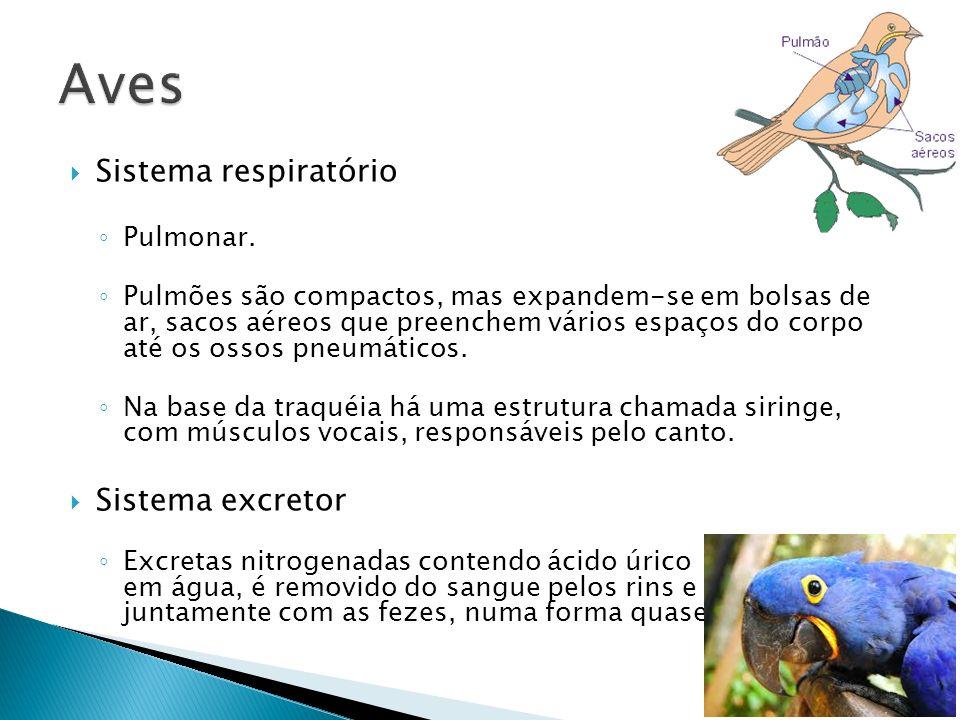 Aves Sistema respiratório Sistema excretor Pulmonar.