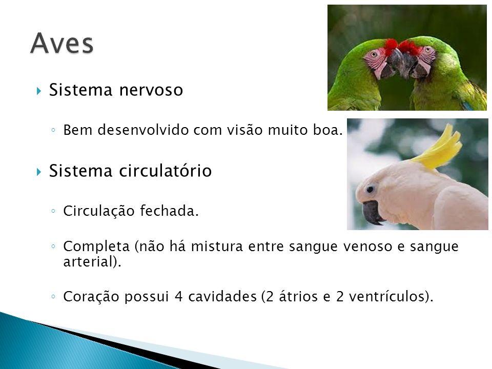 Aves Sistema nervoso Sistema circulatório