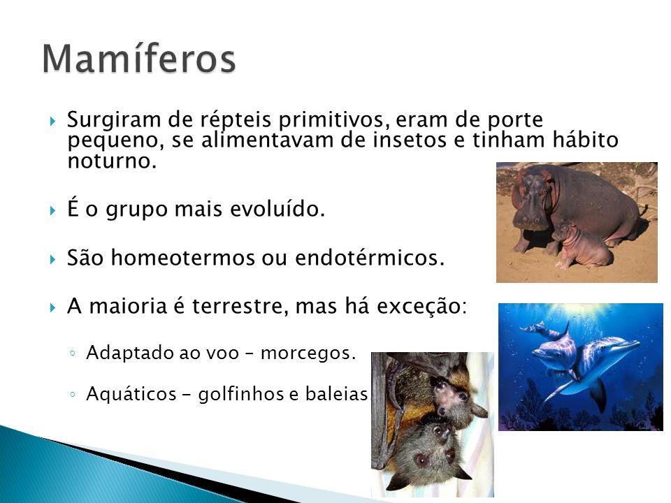 Mamíferos Surgiram de répteis primitivos, eram de porte pequeno, se alimentavam de insetos e tinham hábito noturno.
