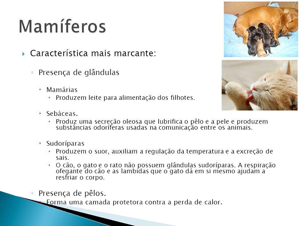 Mamíferos Característica mais marcante: Presença de glândulas