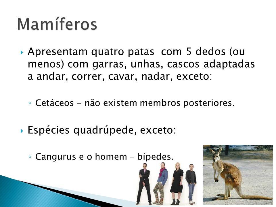 Mamíferos Apresentam quatro patas com 5 dedos (ou menos) com garras, unhas, cascos adaptadas a andar, correr, cavar, nadar, exceto: