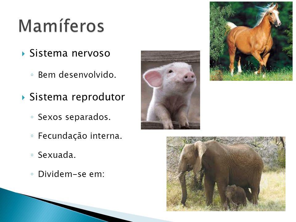 Mamíferos Sistema nervoso Sistema reprodutor Bem desenvolvido.