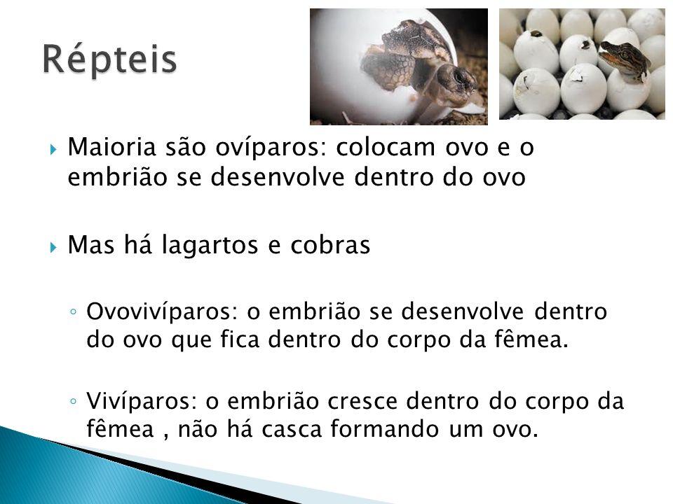 Répteis Maioria são ovíparos: colocam ovo e o embrião se desenvolve dentro do ovo. Mas há lagartos e cobras.