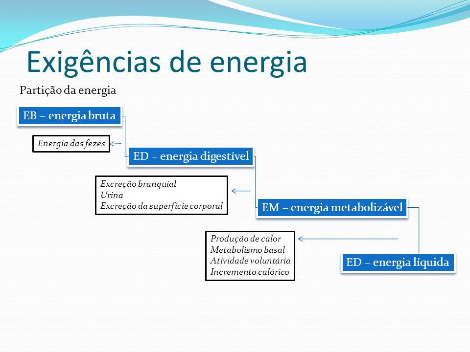 Exigências de energia Partição da energia EB – energia bruta