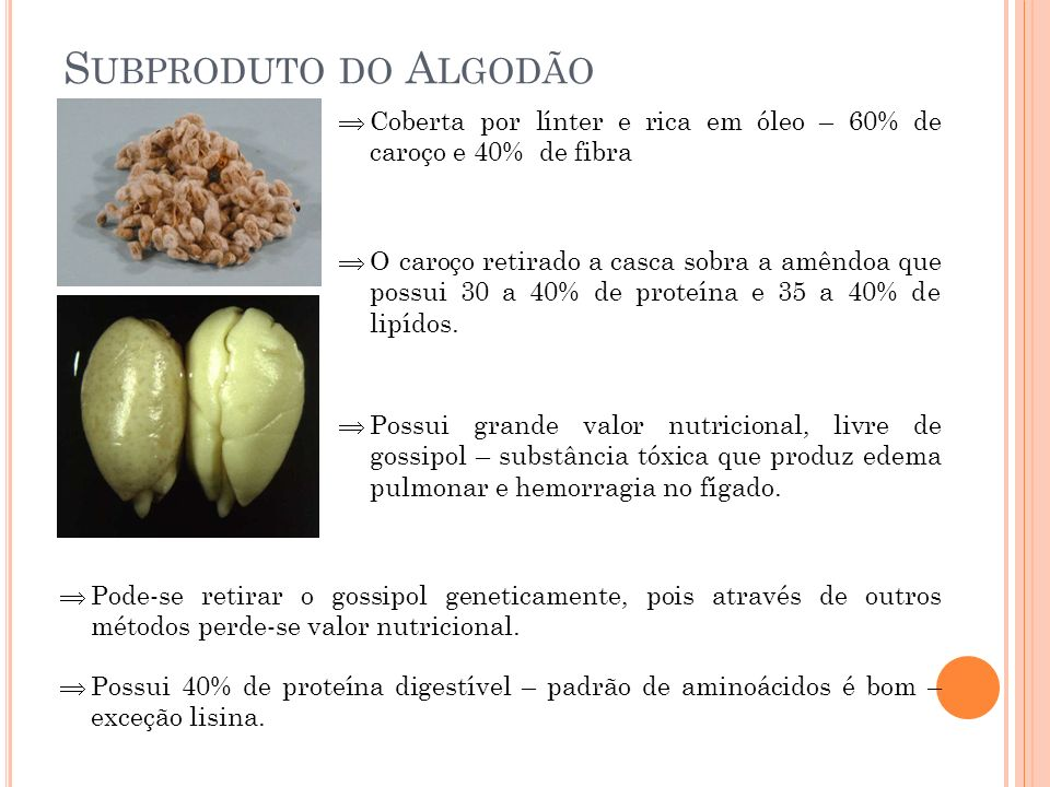 Subproduto do Algodão Coberta por línter e rica em óleo – 60% de caroço e 40% de fibra.