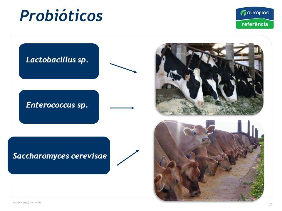 Probióticos Lactobacillus sp. Enterococcus sp. Saccharomyces cerevisae