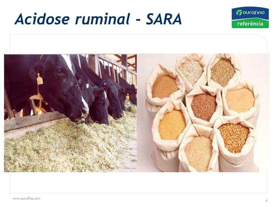 Acidose ruminal - SARA