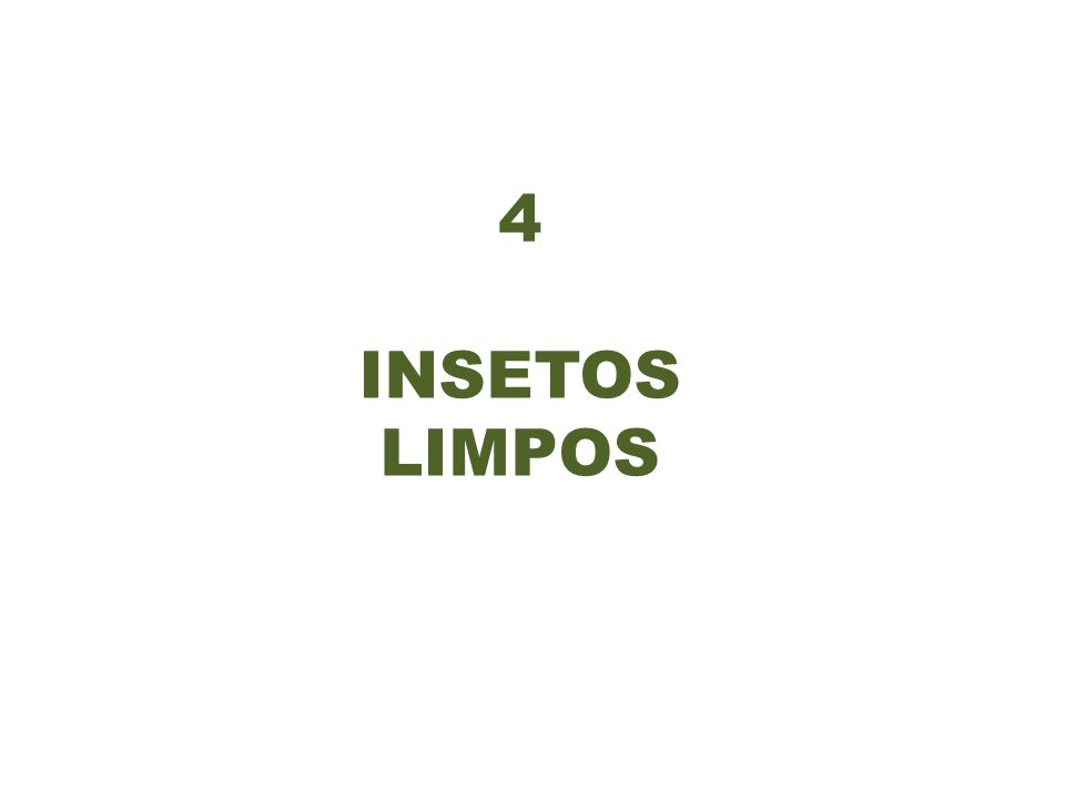 4 INSETOS LIMPOS