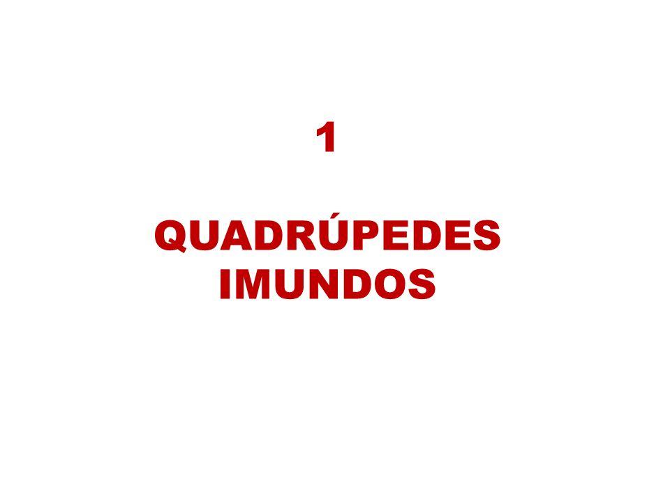 1 QUADRÚPEDES IMUNDOS