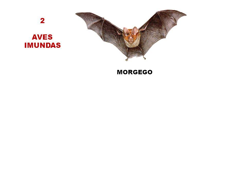 2 AVES IMUNDAS MORGEGO