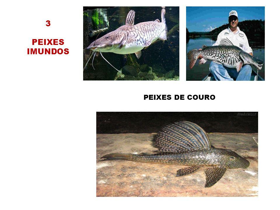 3 PEIXES IMUNDOS PEIXES DE COURO