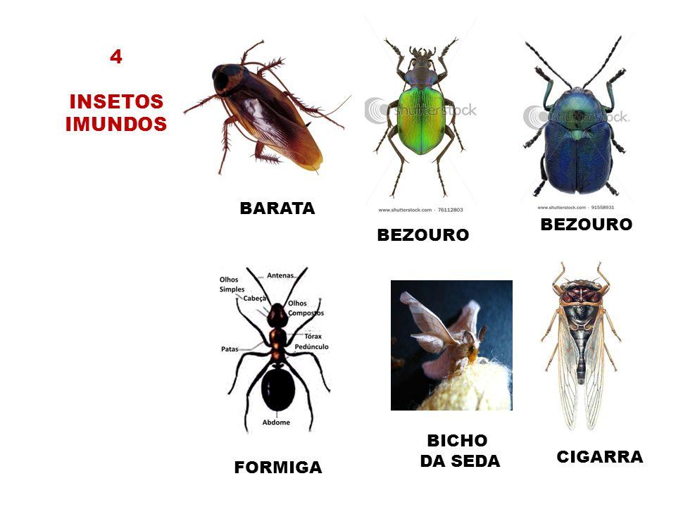 4 INSETOS IMUNDOS BARATA BEZOURO BEZOURO BICHO DA SEDA CIGARRA FORMIGA