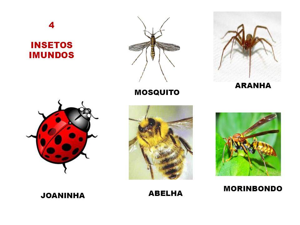 4 INSETOS IMUNDOS ARANHA MOSQUITO MORINBONDO ABELHA JOANINHA