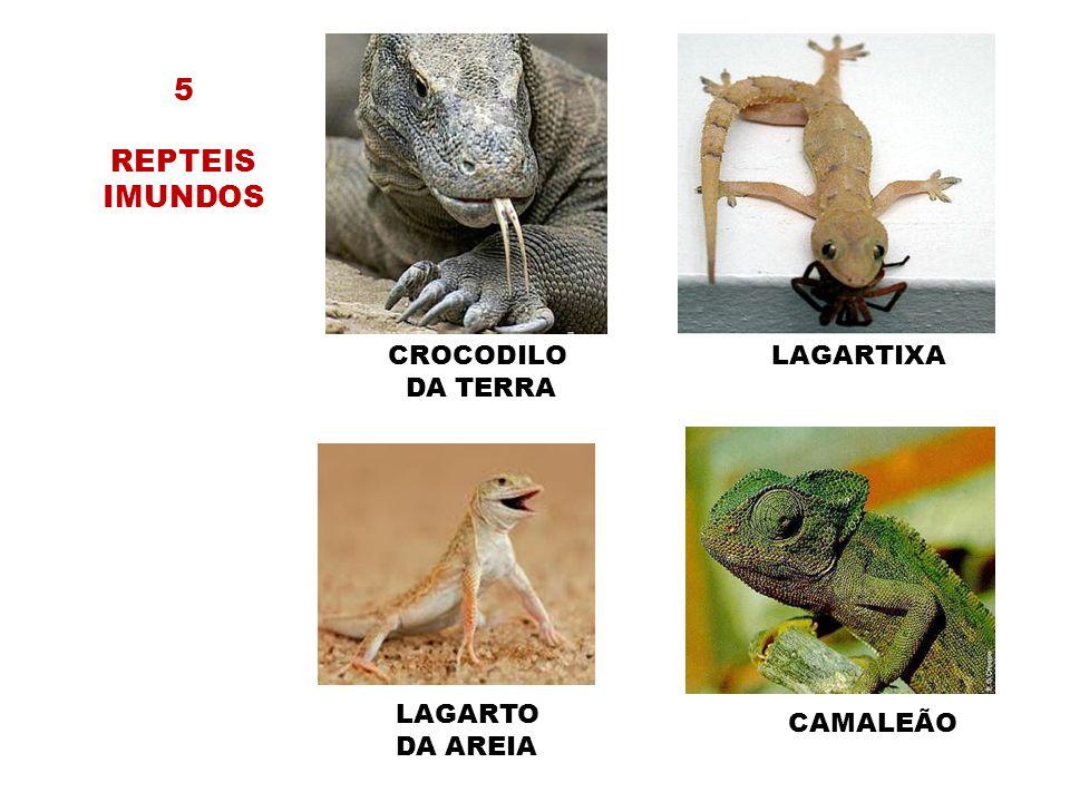 5 REPTEIS IMUNDOS CROCODILO DA TERRA LAGARTIXA LAGARTO DA AREIA