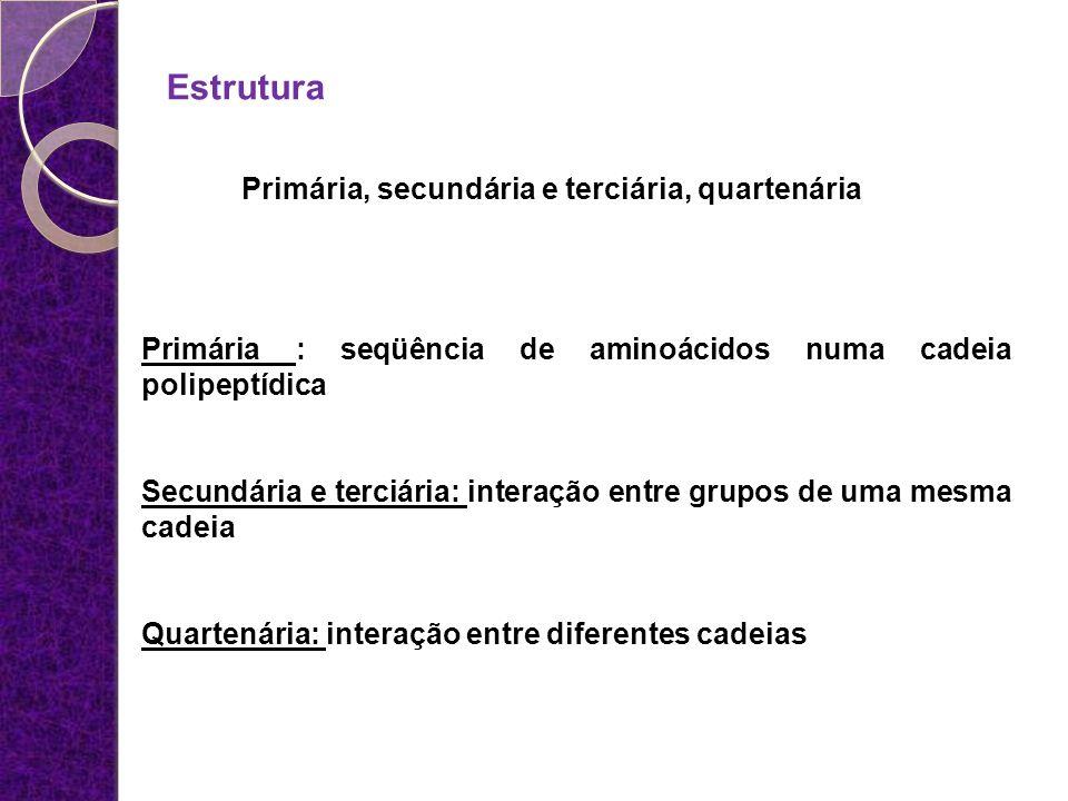 Estrutura Primária, secundária e terciária, quartenária