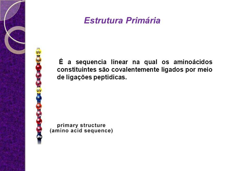 Estrutura Primária É a sequencia linear na qual os aminoácidos constituintes são covalentemente ligados por meio de ligações peptidicas.