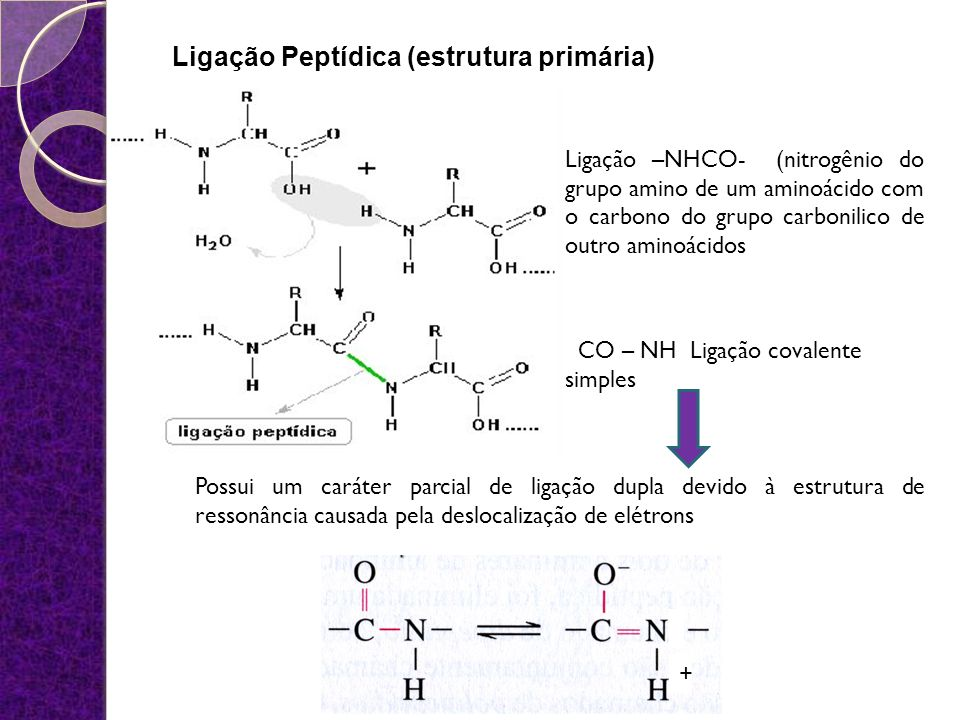 Ligação Peptídica (estrutura primária)