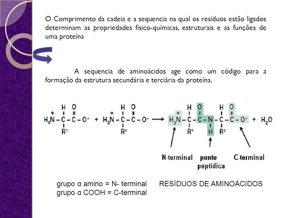 O Comprimento da cadeia e a sequencia na qual os resíduos estão ligados determinam as propriedades físico-químicas, estruturais e as funções de uma proteína