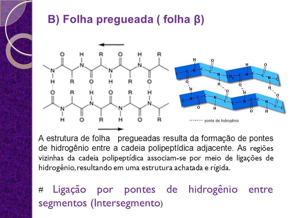 B) Folha pregueada ( folha β)