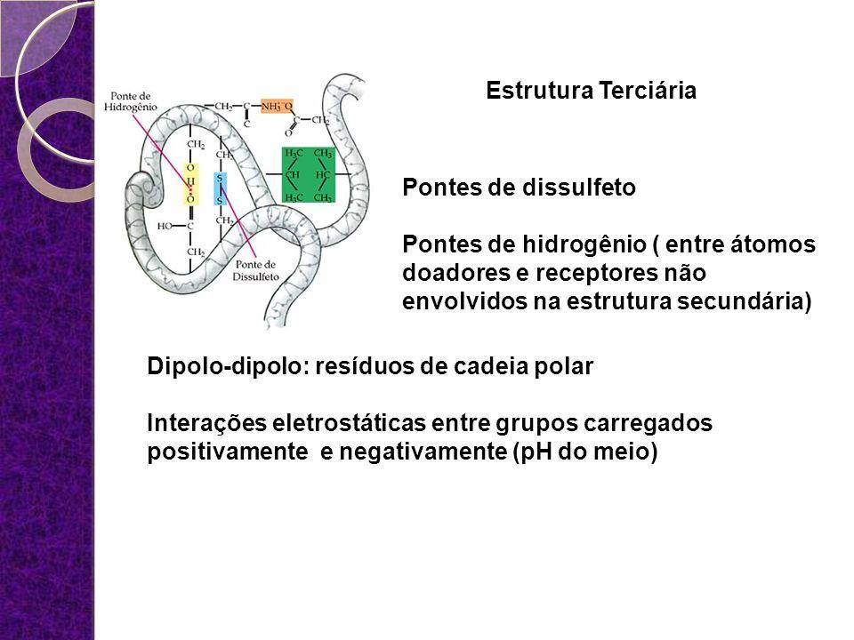 Estrutura Terciária Pontes de dissulfeto. Pontes de hidrogênio ( entre átomos doadores e receptores não envolvidos na estrutura secundária)