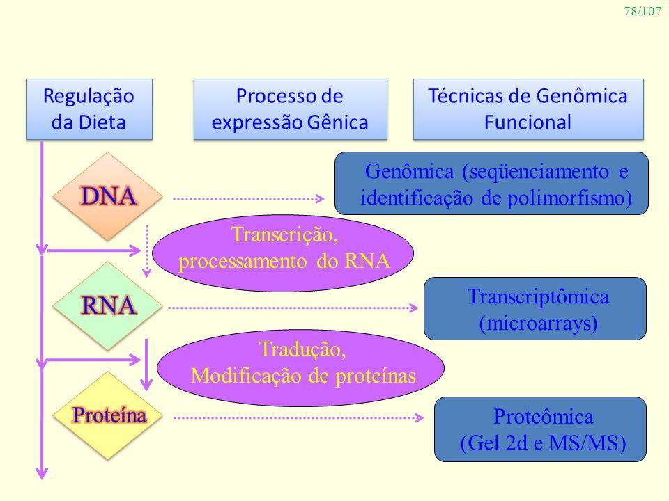 DNA RNA Regulação da Dieta Processo de expressão Gênica