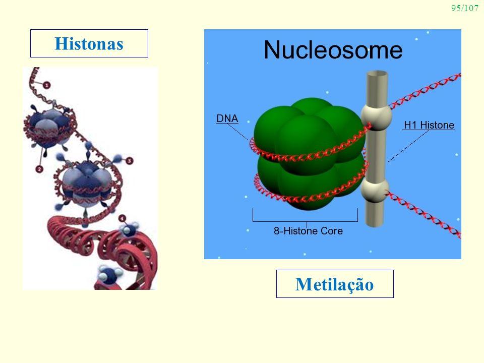 Histonas Metilação