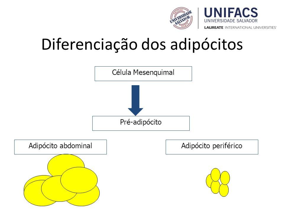 Diferenciação dos adipócitos