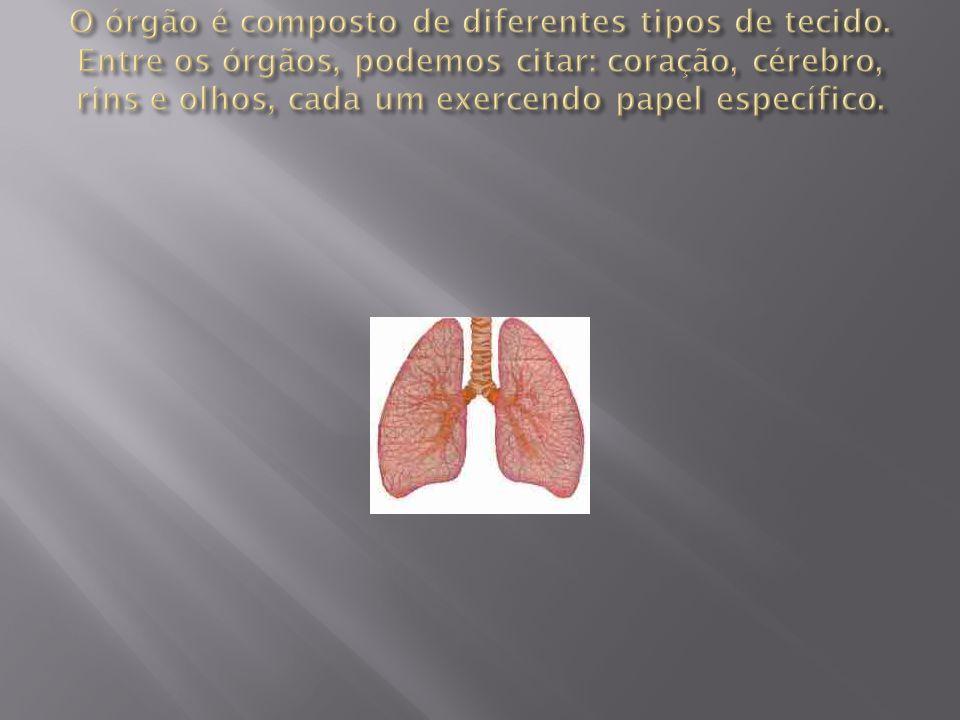O órgão é composto de diferentes tipos de tecido