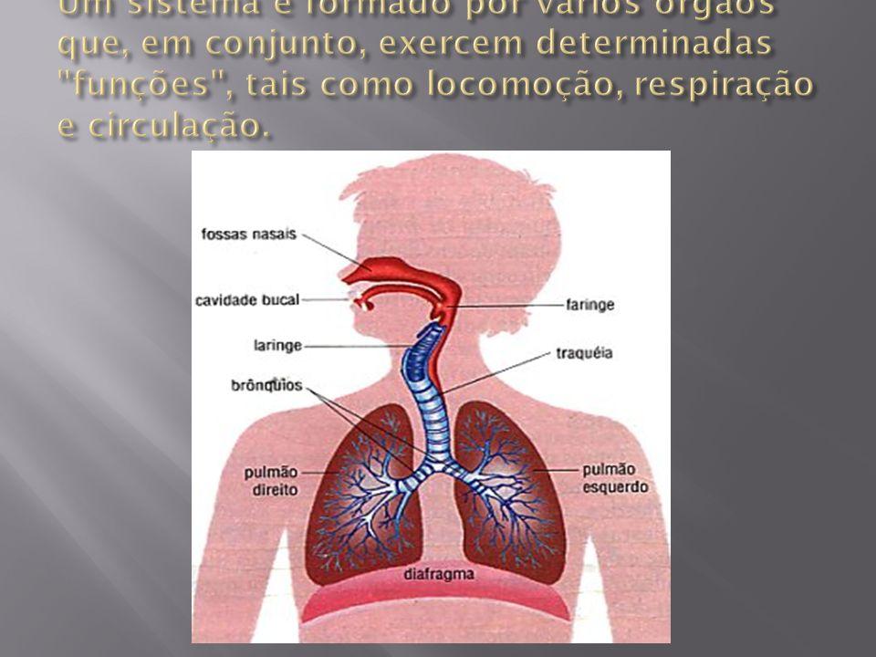 Um sistema é formado por vários órgãos que, em conjunto, exercem determinadas funções , tais como locomoção, respiração e circulação.