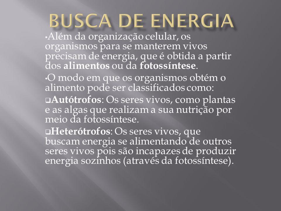 Busca de energia