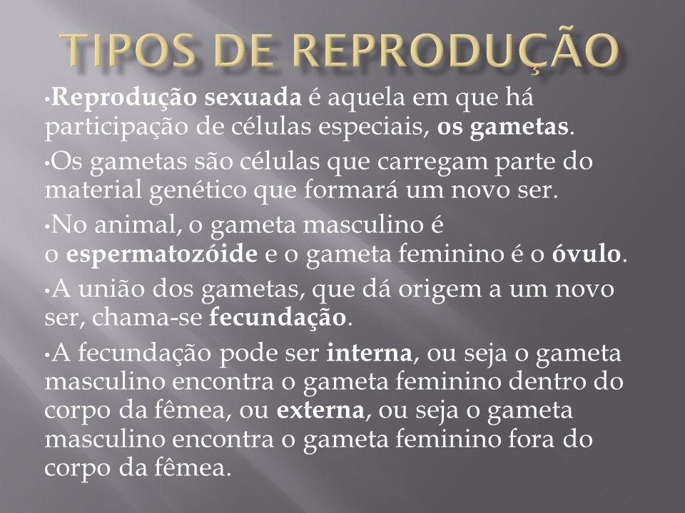 Tipos de reprodução Reprodução sexuada é aquela em que há participação de células especiais, os gametas.