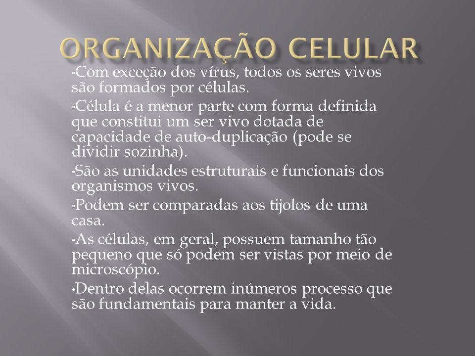 Organização Celular Com exceção dos vírus, todos os seres vivos são formados por células.