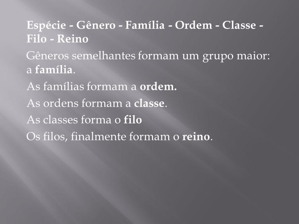 Espécie - Gênero - Família - Ordem - Classe - Filo - Reino