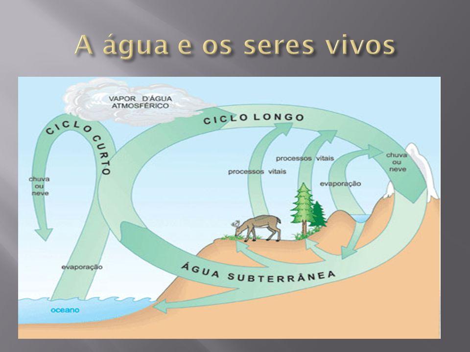A água e os seres vivos